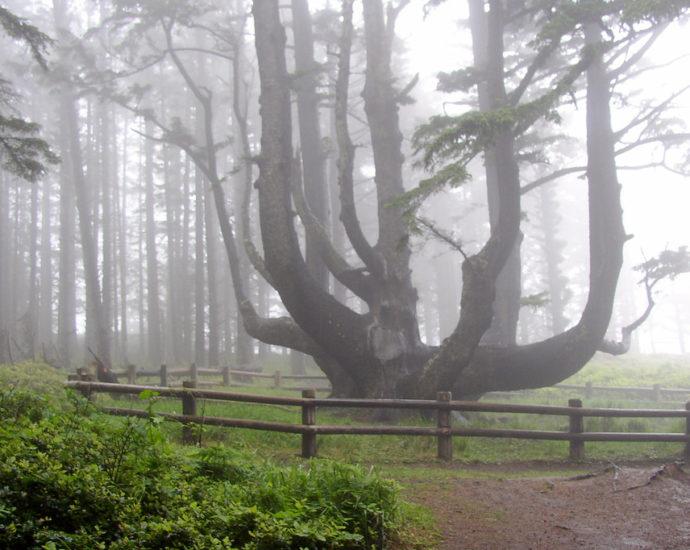 Image Credit - That Oregon Life
