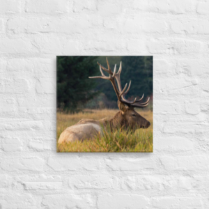 OREGON ELK - 16X16 Canvas Wrap Print