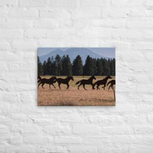 BLACK HORSES - 18X24 Canvas Wrap Print