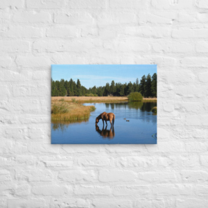 HORSE IN THE LAKE - 18X24 Canvas Wrap Print