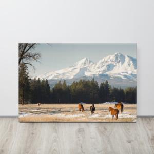 SISTERS - GRAZING HORSES - 24X36 Canvas Wrap Print