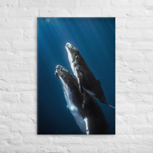 WHALES - 24X36 Canvas Wrap Print