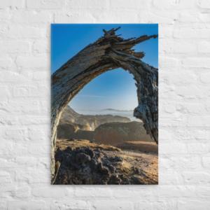 DRIFTWOOD - 24X36 Canvas Wrap Print