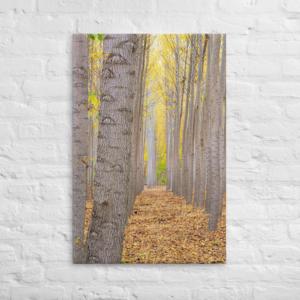 BOARDMAN TREE FARM - 24X36 Canvas Wrap Print