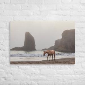 HORSE ON THE BEACH - 24X36 Canvas Wrap Print